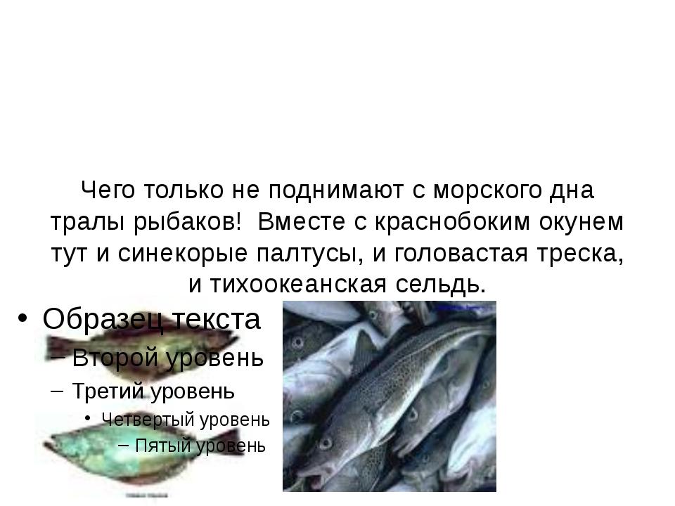 Чего только не поднимают с морского дна тралы рыбаков! Вместе с краснобоким о...