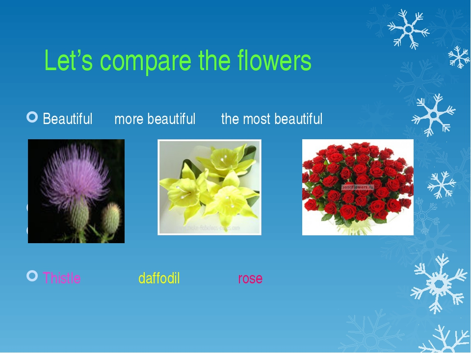 Let's compare the flowers Beautiful more beautiful the most beautiful Thistl...