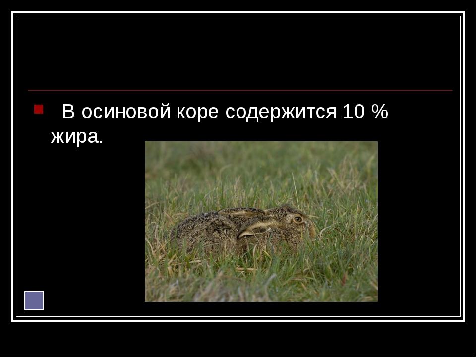 В осиновой коре содержится 10 % жира.
