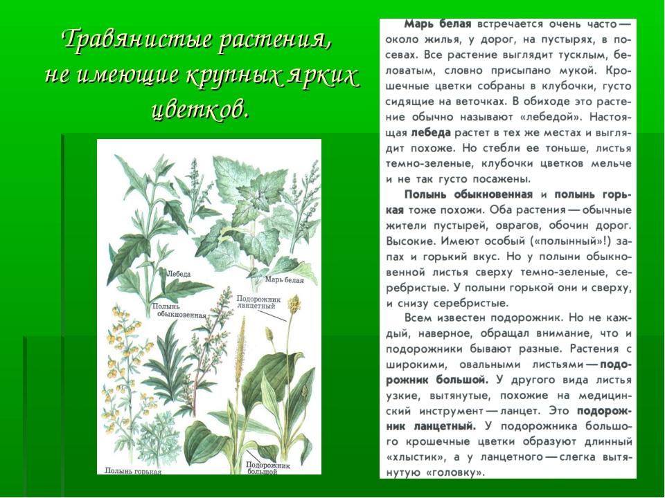 Травянистые растения, не имеющие крупных ярких цветков.