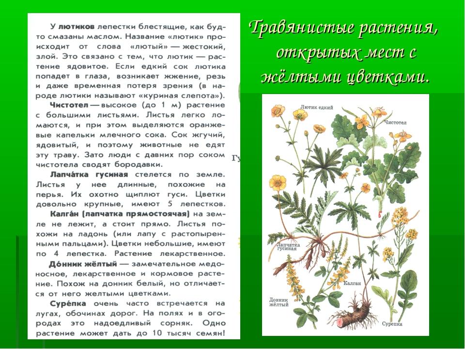 Травянистые растения, открытых мест с жёлтыми цветками.
