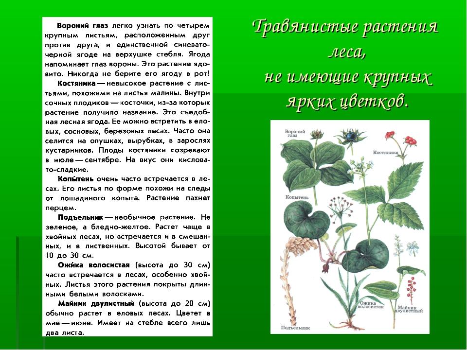 Травянистые растения леса, не имеющие крупных ярких цветков.
