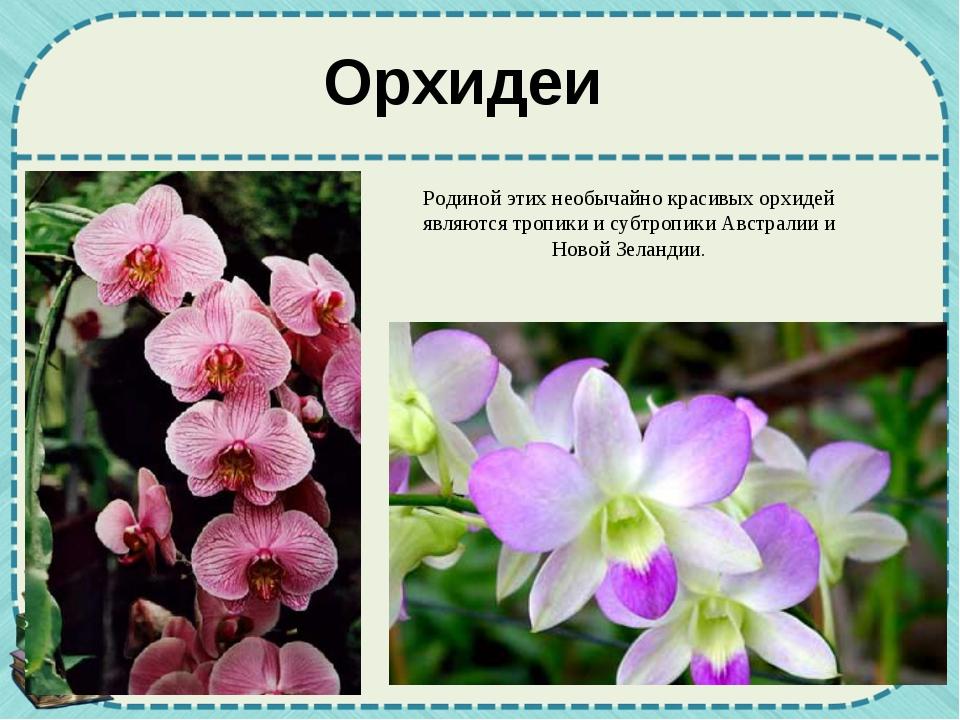 Орхидеи Родиной этих необычайно красивых орхидей являются тропики и субтропик...