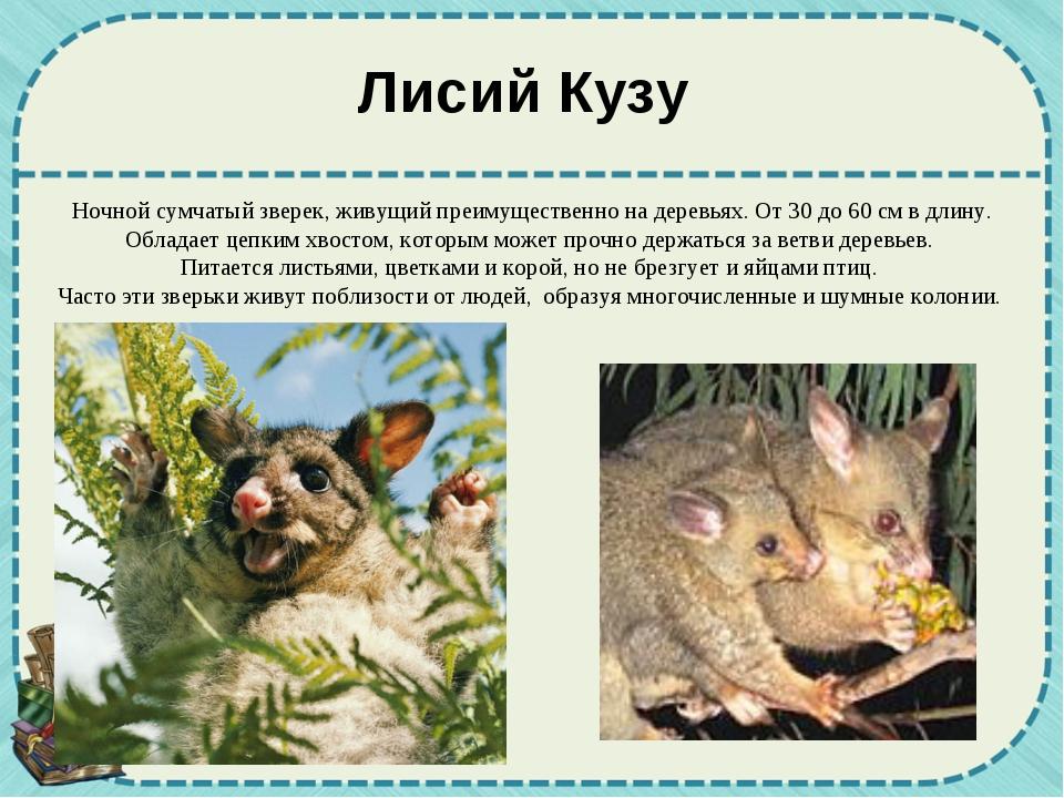 Ночной сумчатый зверек, живущий преимущественно на деревьях. От 30 до 60 см в...