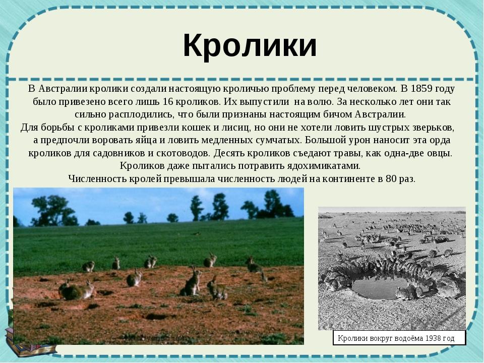 Кролики вокруг водоёма 1938 год В Австралии кролики создали настоящую кроличь...