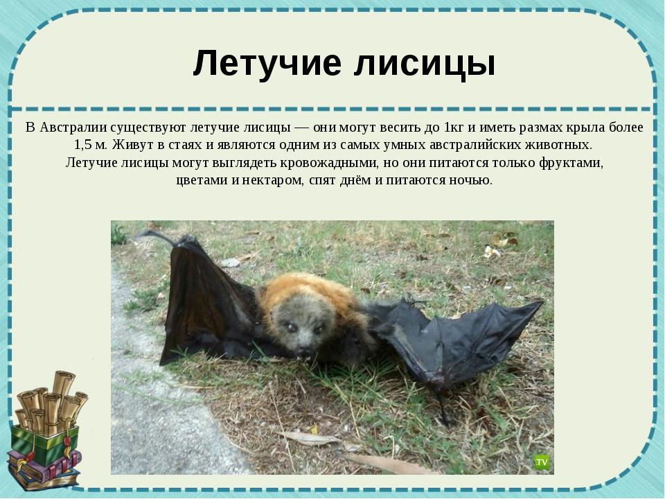 В Австралии существуют летучие лисицы — они могут весить до 1кг и иметь разма...
