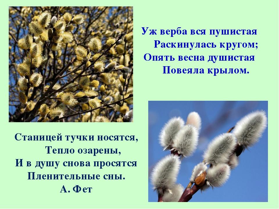 Уж верба вся пушистая  Раскинулась кругом; Опять весна душистая  Пове...