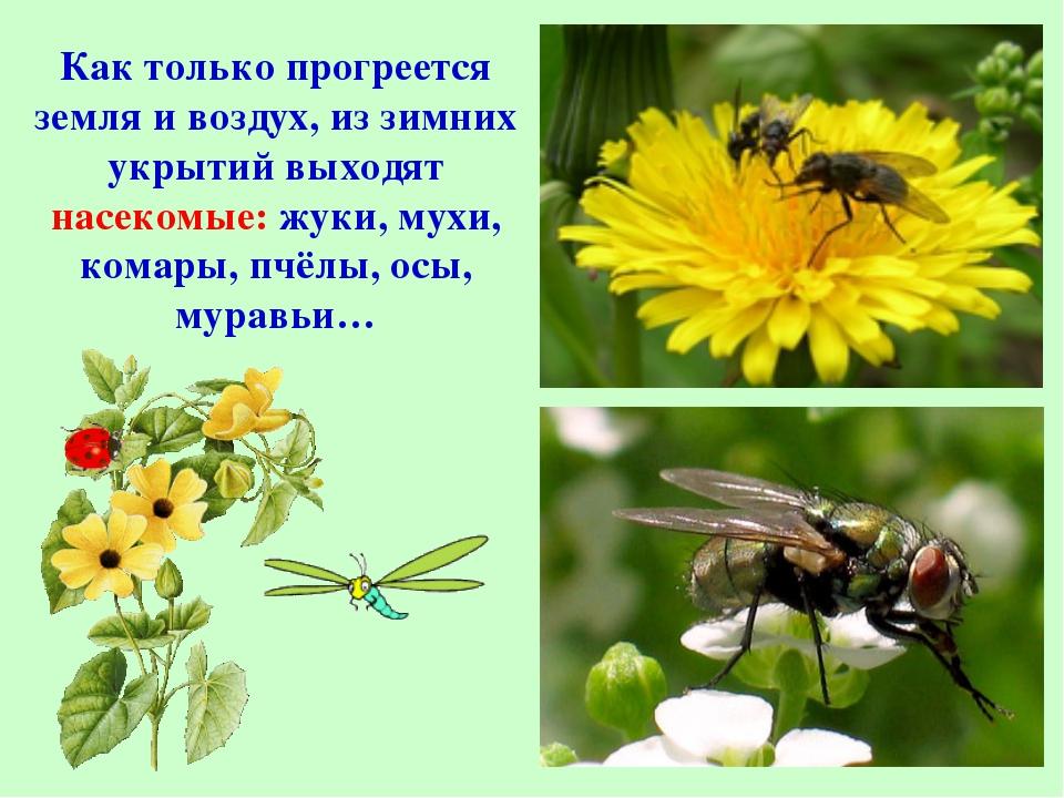 Как только прогреется земля и воздух, из зимних укрытий выходят насекомые: жу...