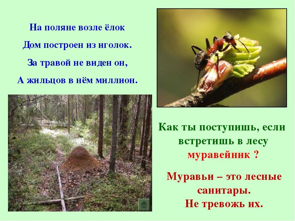На поляне возле ёлок Дом построен из иголок. За травой не виден он, А жильцов...