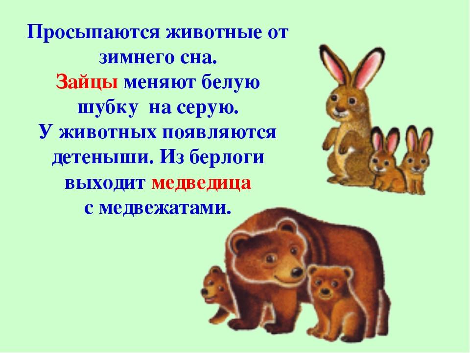 Просыпаются животные от зимнего сна. Зайцы меняют белую шубку на серую. У жив...