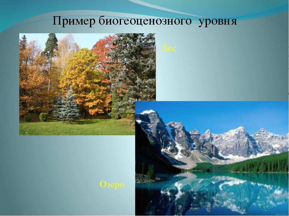 Пример биогеоценозного уровня Лес Озеро