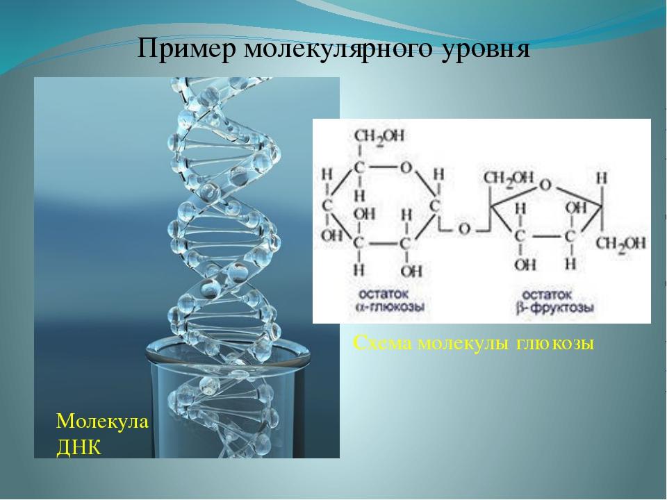 Пример молекулярного уровня Молекула ДНК Схема молекулы глюкозы