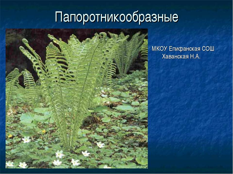 Папоротникообразные МКОУ Епифанская СОШ Хаванская Н.А.
