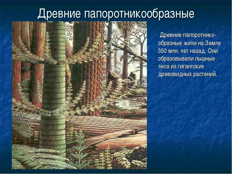 Древние папоротникообразные Древние папоротнико-образные жили на Земле 350 мл...