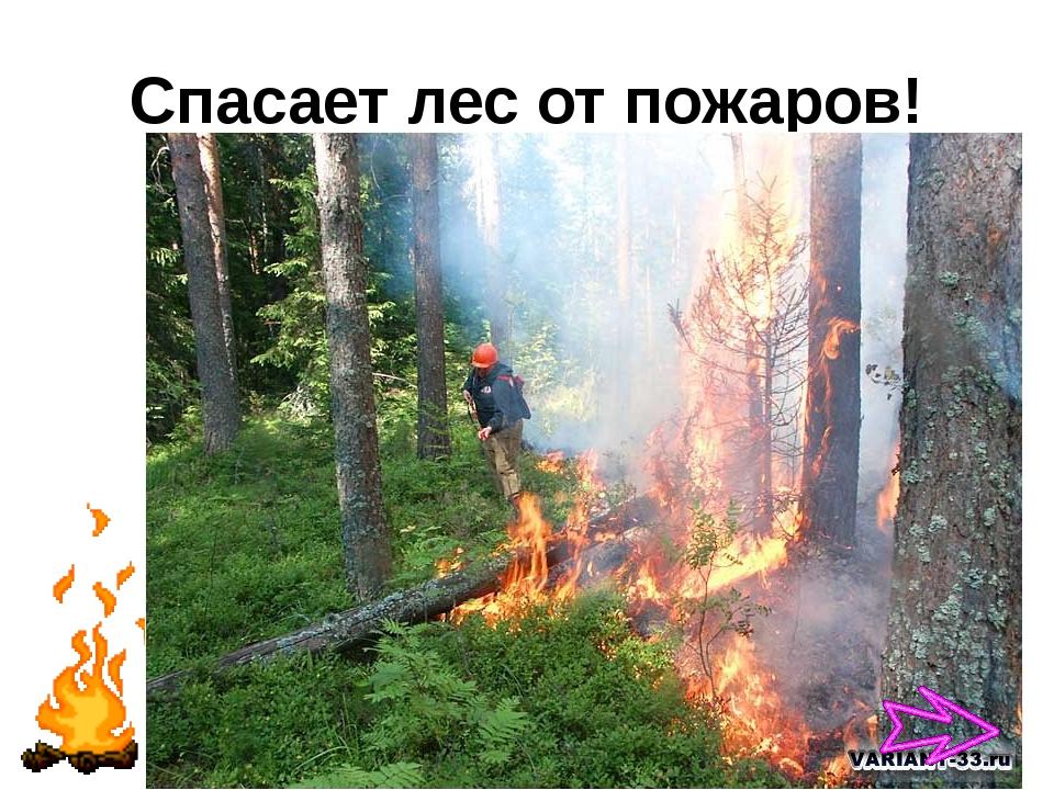 Спасает лес от пожаров!