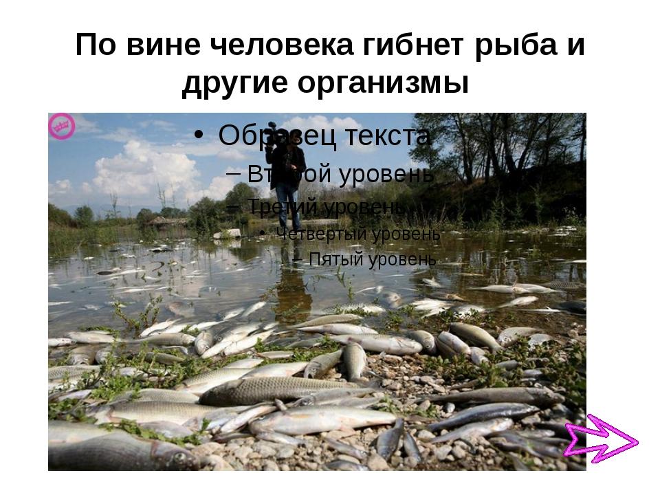 По вине человека гибнет рыба и другие организмы