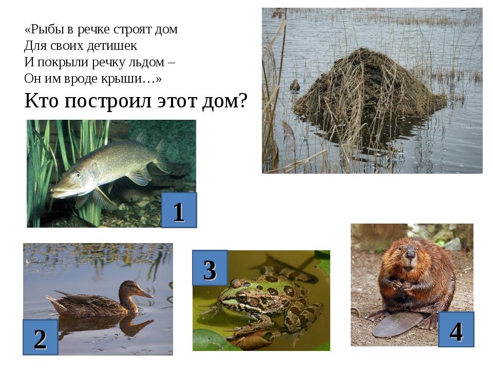 «Рыбы в речке строят дом Для своих детишек И покрыли речку льдом – Он им врод...
