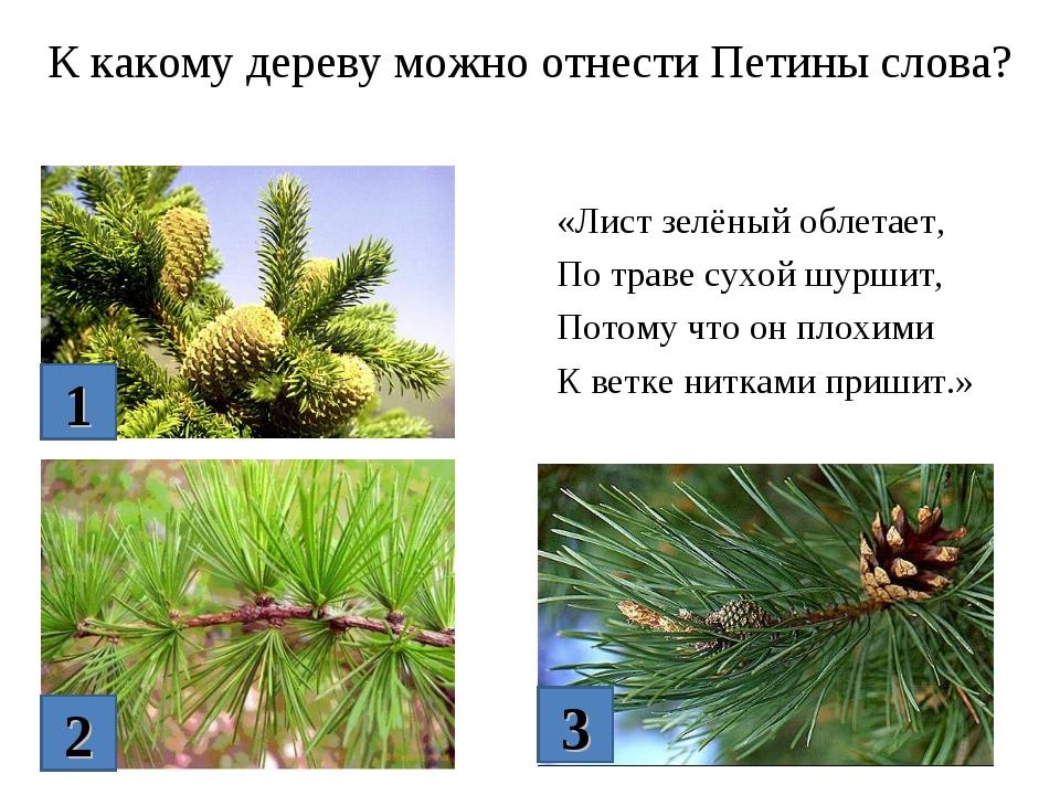 К какому дереву можно отнести Петины слова? «Лист зелёный облетает, По траве...