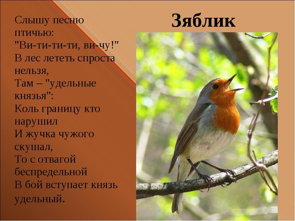 """Зяблик Слышу песню птичью: """"Ви-ти-ти-ти, ви-чу!"""" В лес лететь спроста нельзя,..."""