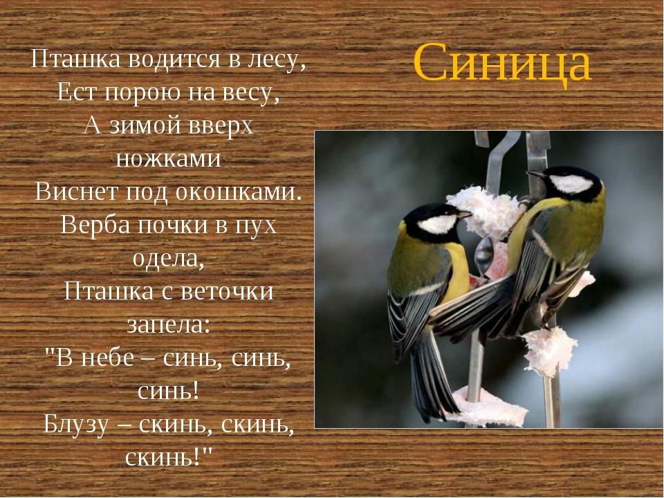 Синица Пташка водится в лесу, Ест порою на весу, А зимой вверх ножками Виснет...