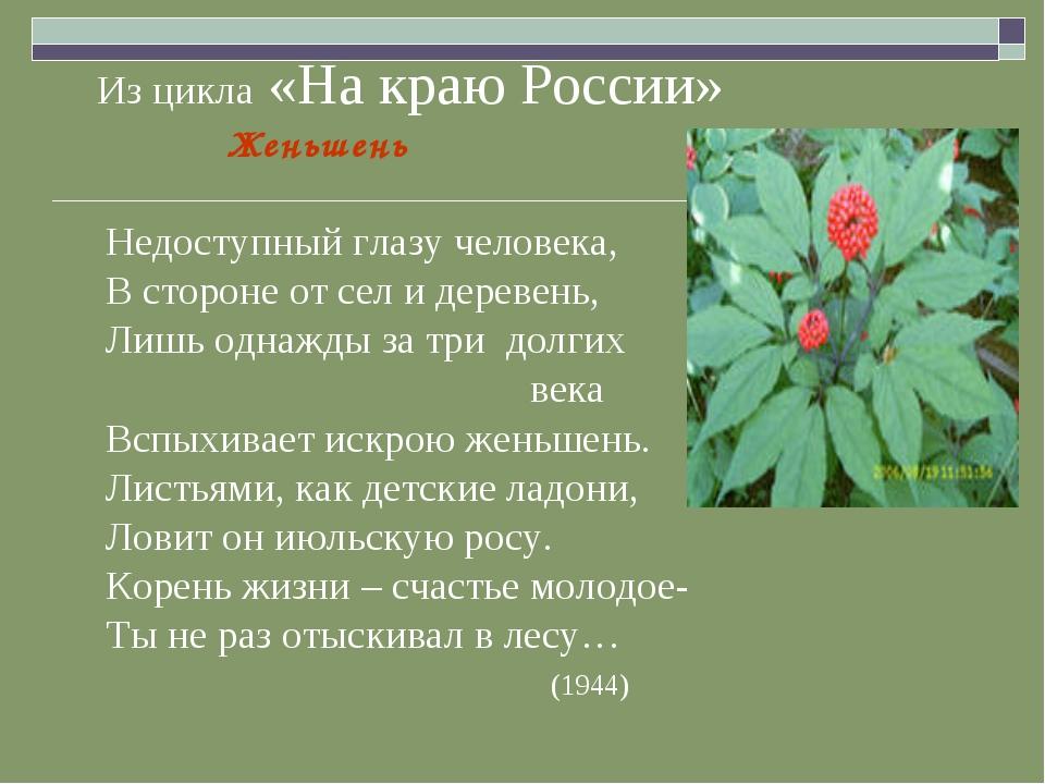 Из цикла «На краю России» Женьшень Недоступный глазу человека, В стороне от...
