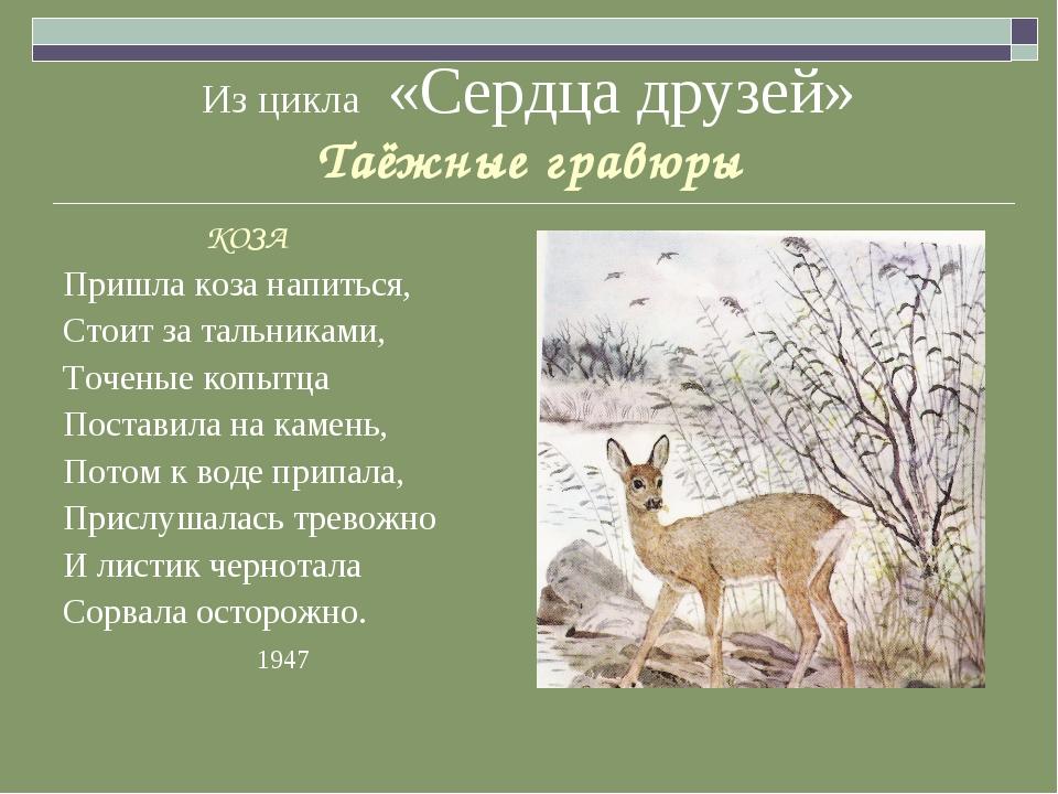 Из цикла «Сердца друзей» Таёжные гравюры КОЗА Пришла коза напиться, Стоит за...