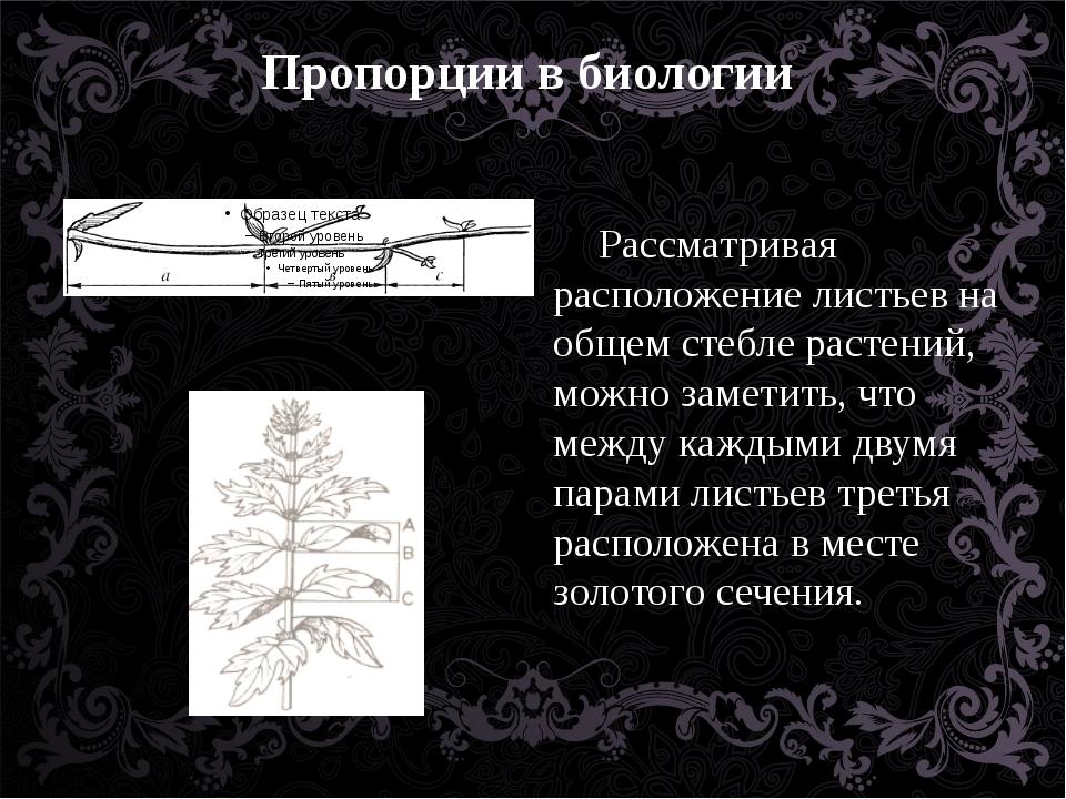 Пропорции в биологии Рассматривая расположение листьев на общем стебле растен...