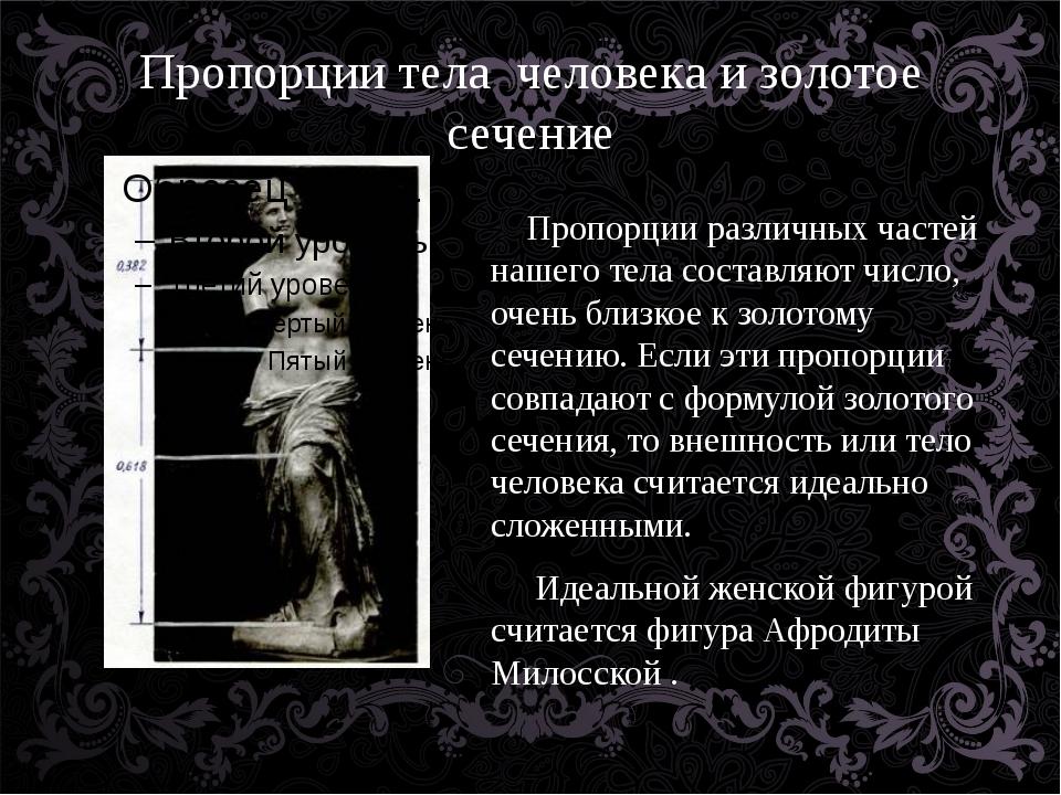 Пропорции тела человека и золотое сечение Пропорции различных частей нашего т...