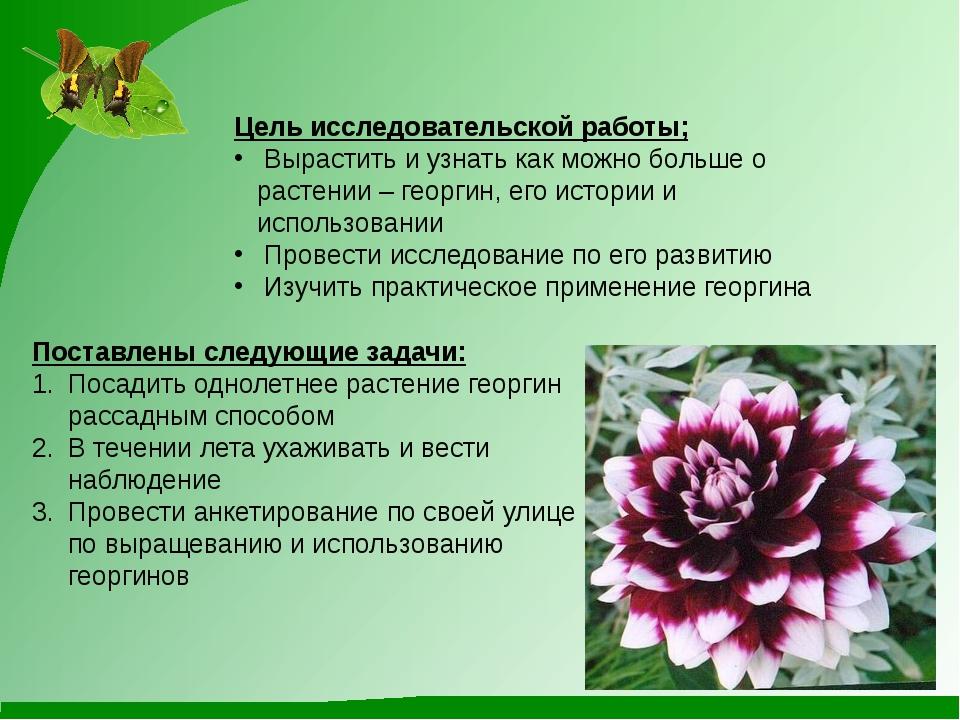 Цель исследовательской работы; Вырастить и узнать как можно больше о растении...