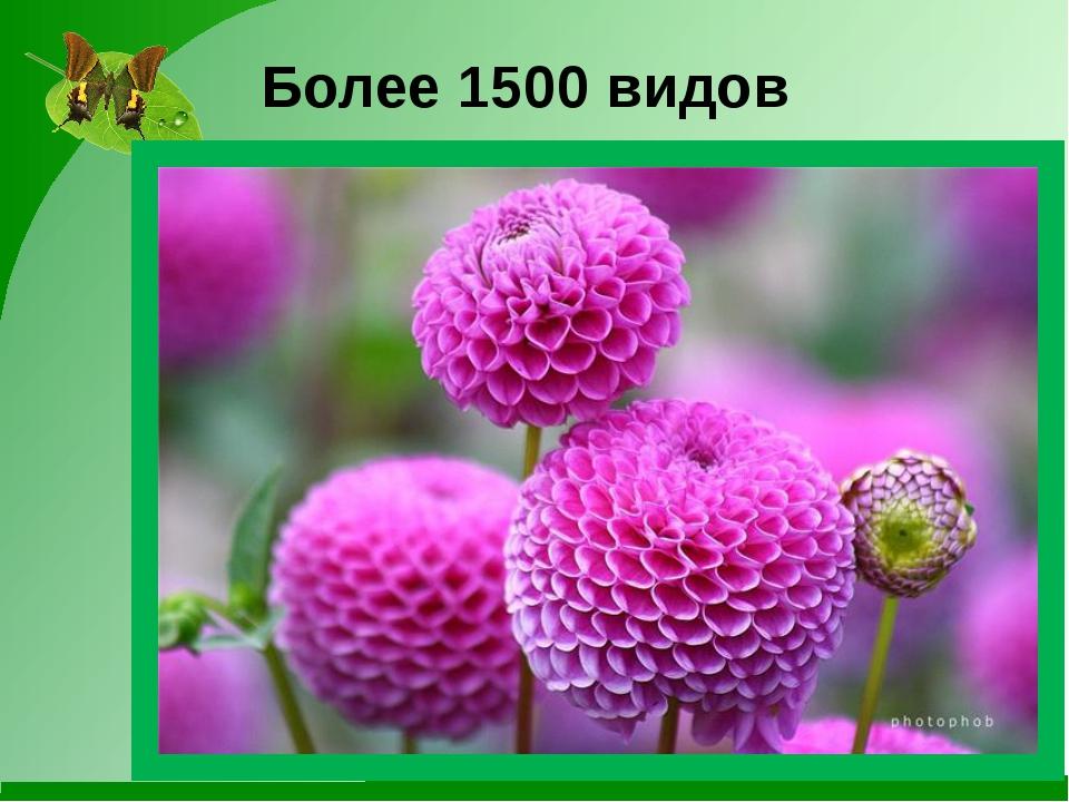 Более 1500 видов