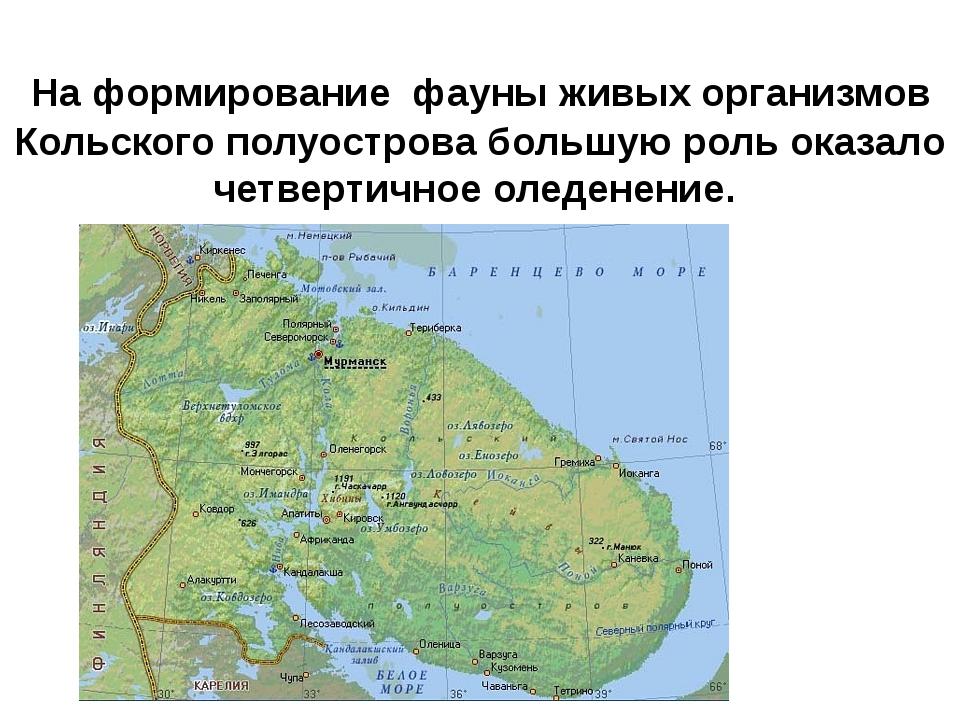 На формирование фауны живых организмов Кольского полуострова большую роль ок...