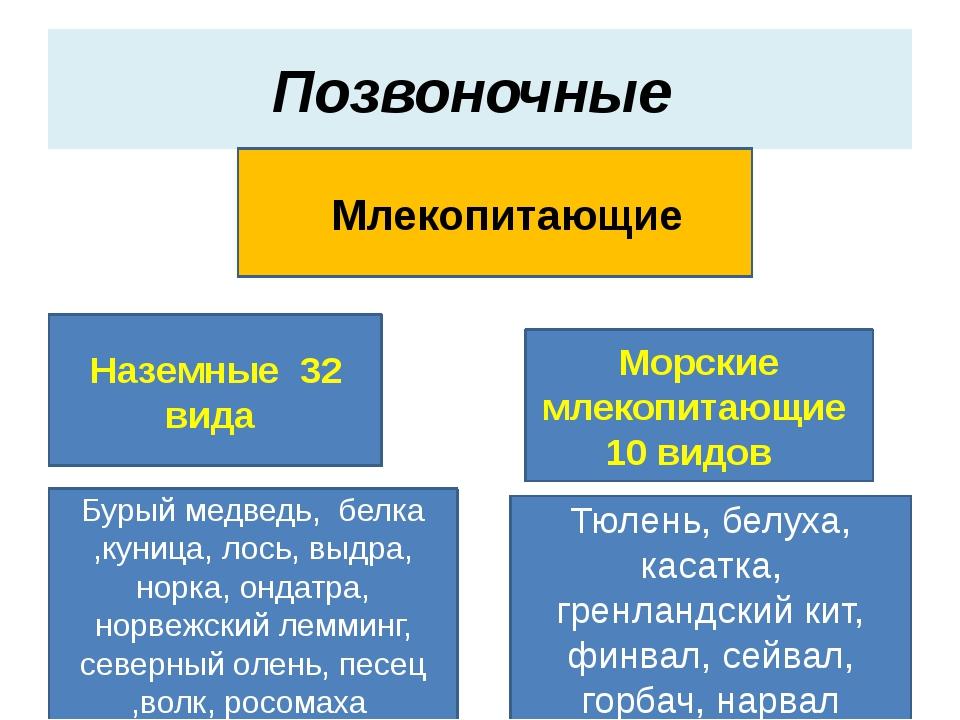 Позвоночные Млекопитающие Наземные 32 вида Морские млекопитающие 10 видов Бур...