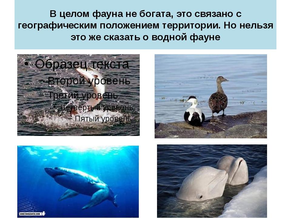 В целом фауна не богата, это связано с географическим положением территории....