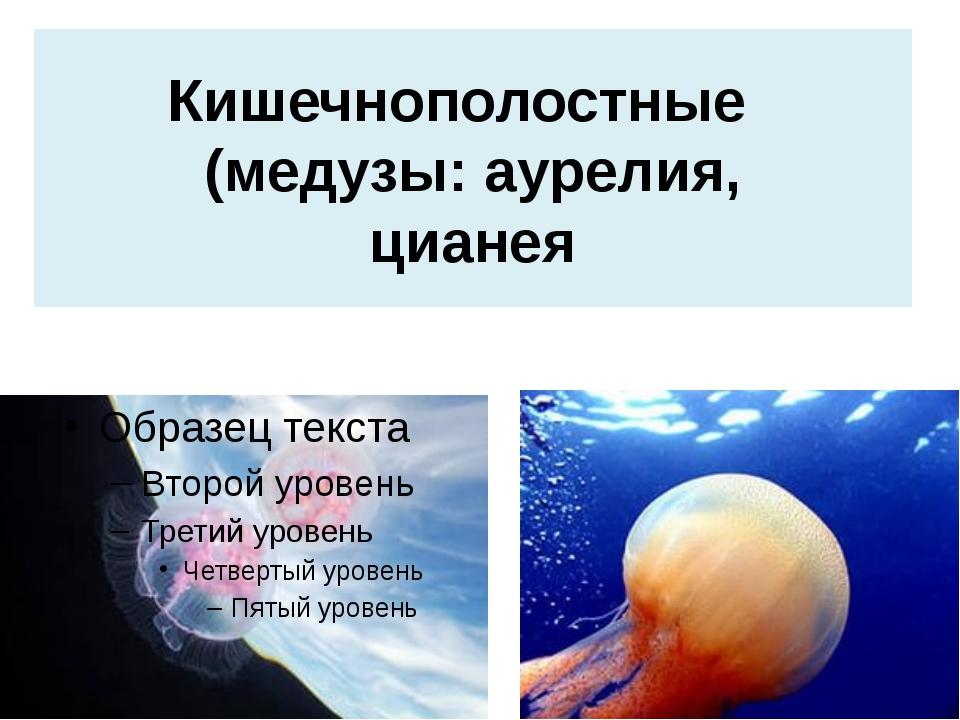 Кишечнополостные (медузы: аурелия, цианея