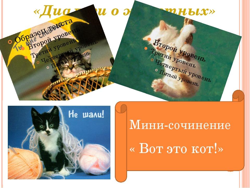 «Диалоги о животных» Мини-сочинение « Вот это кот!»