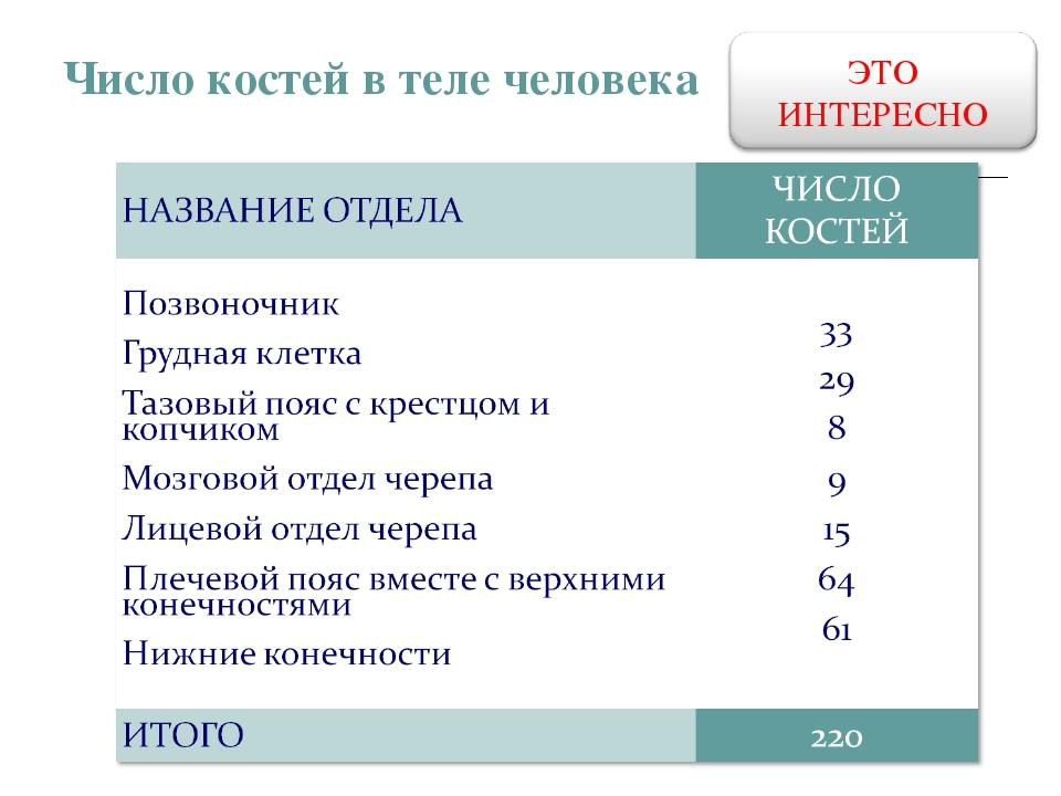 Число костей в теле человека
