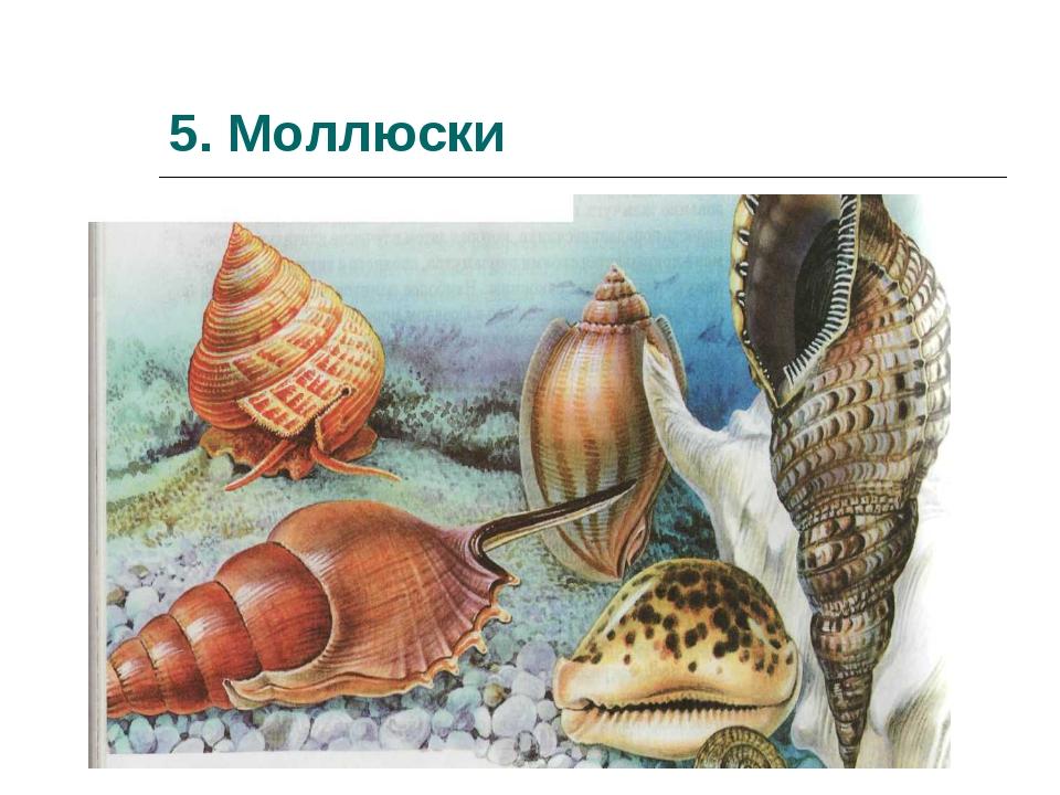 5. Моллюски