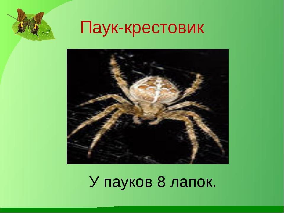 Паук-крестовик У пауков 8 лапок.