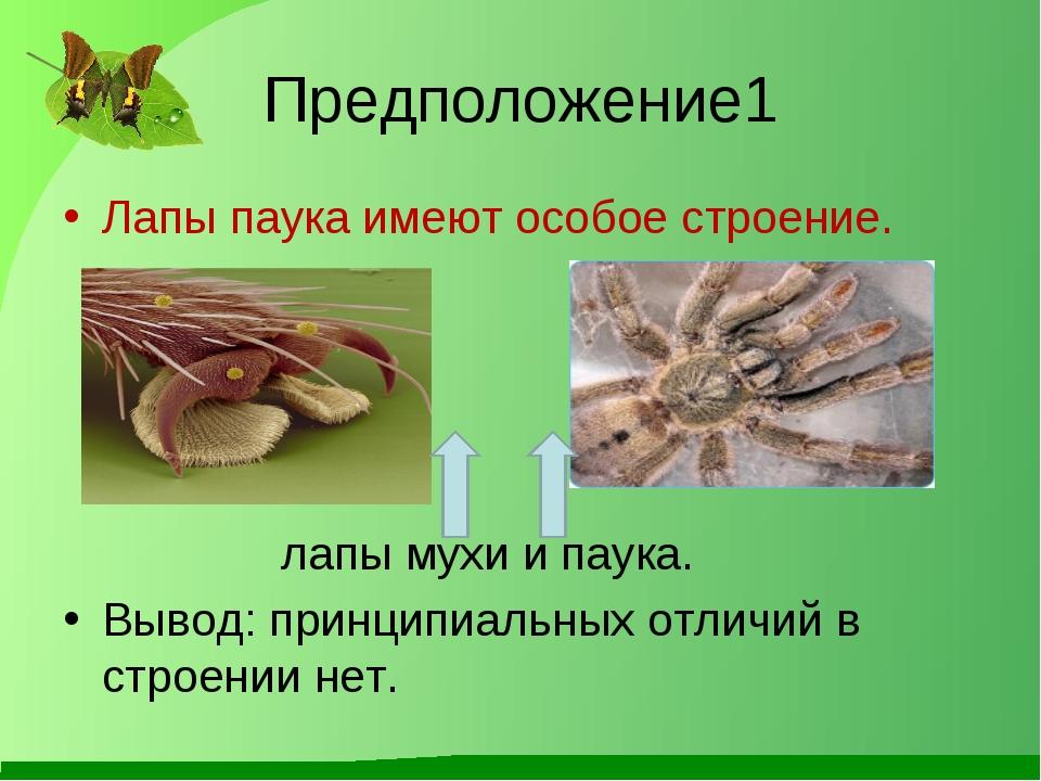 Предположение1 Лапы паука имеют особое строение. лапы мухи и паука. Вывод: пр...