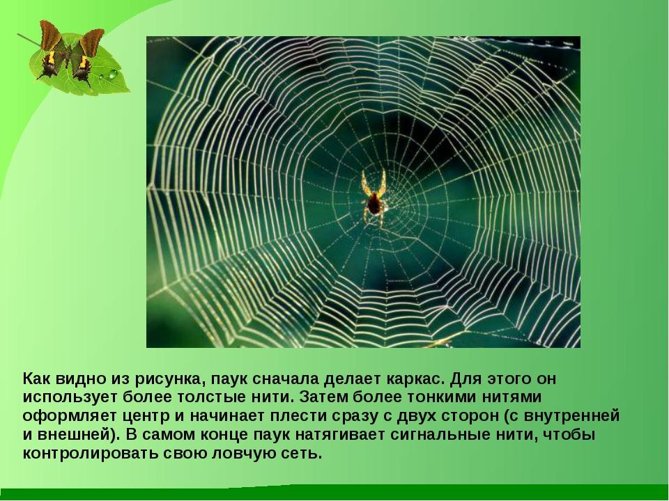 Как видно из рисунка, паук сначала делает каркас. Для этого он использует бол...