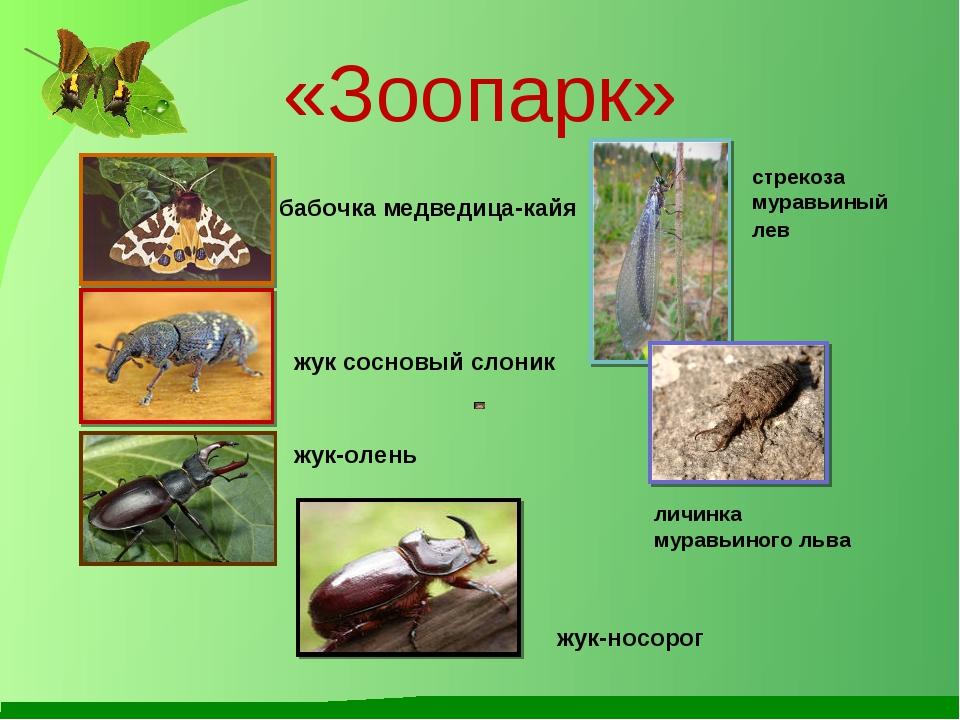 «Зоопарк» бабочка медведица-кайя жук сосновыйслоник личинка муравьиногольва...