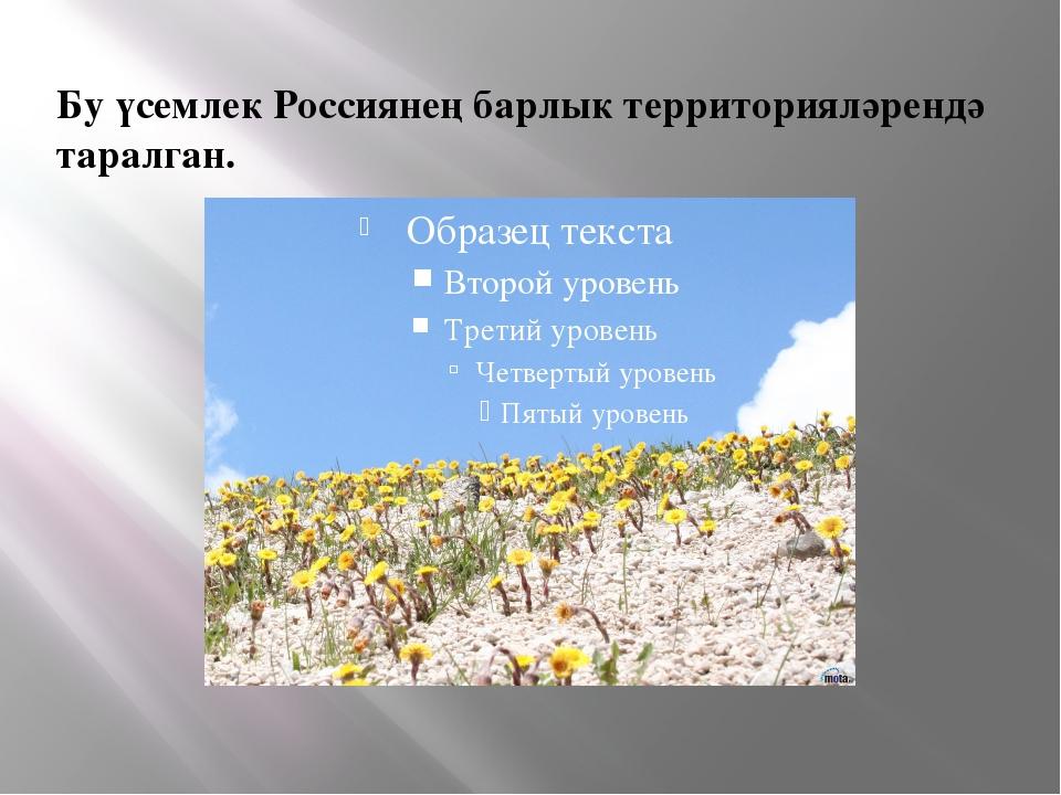 Бу үсемлек Россиянең барлык территорияләрендә таралган.