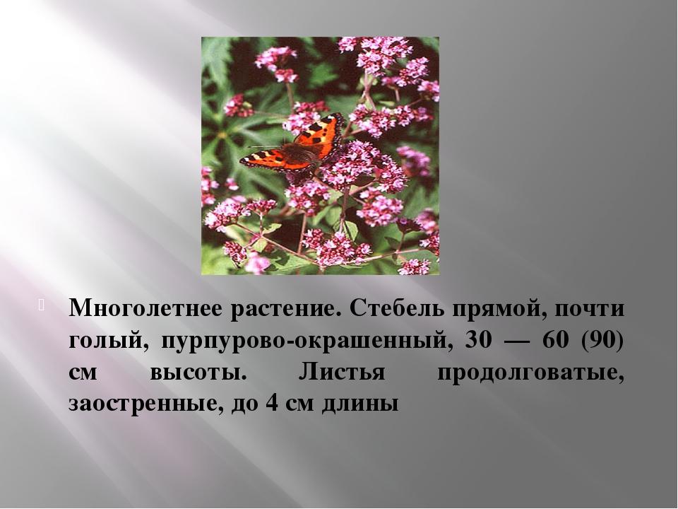 Многолетнее растение. Стебель прямой, почти голый, пурпурово-окрашенный, 30 —...