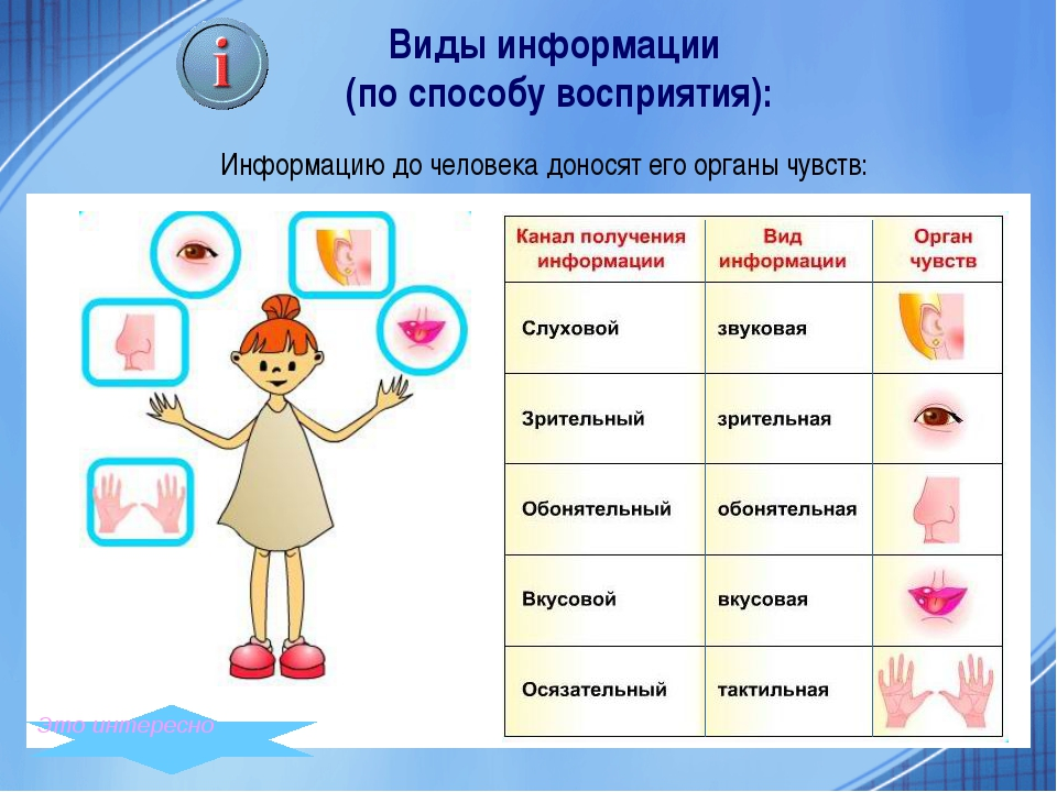 Информацию до человека доносят его органы чувств: Виды информации (по способ...