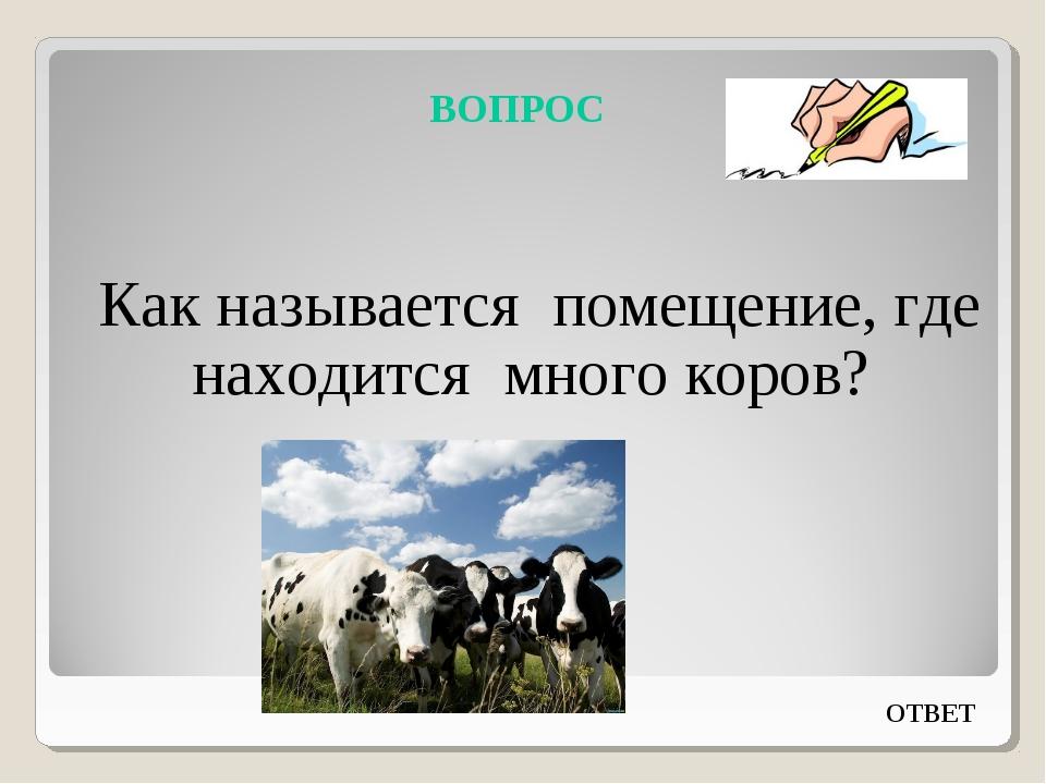 ВОПРОС Как называется помещение, где находится много коров? ОТВЕТ