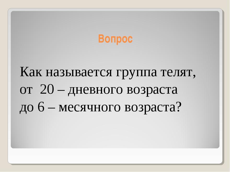 Вопрос Как называется группа телят, от 20 – дневного возраста до 6 – месячног...