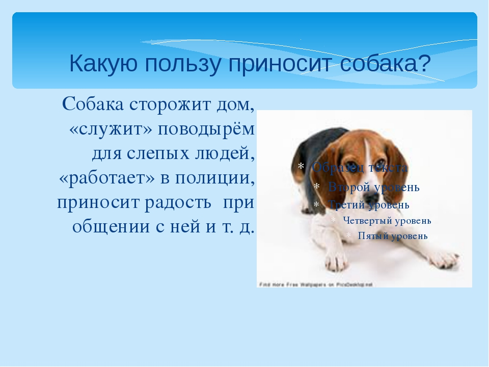 Собака сторожит дом, «служит» поводырём для слепых людей, «работает» в полици...