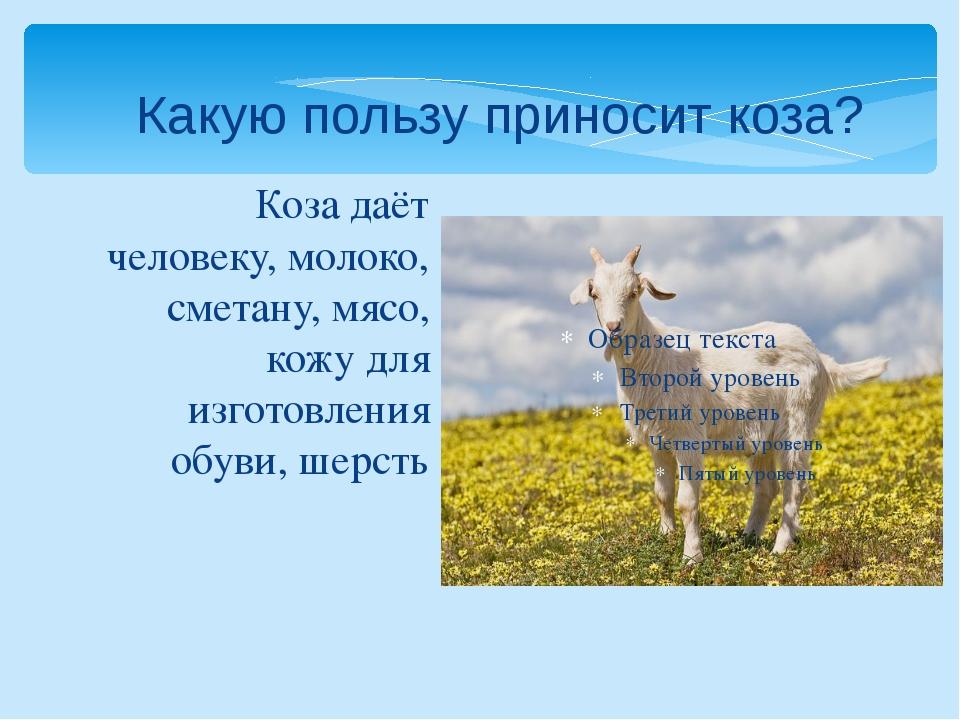 Коза даёт человеку, молоко, сметану, мясо, кожу для изготовления обуви, шерст...