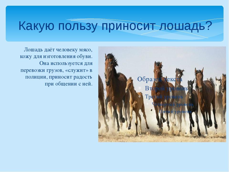 Лошадь даёт человеку мясо, кожу для изготовления обуви. Она используется для...