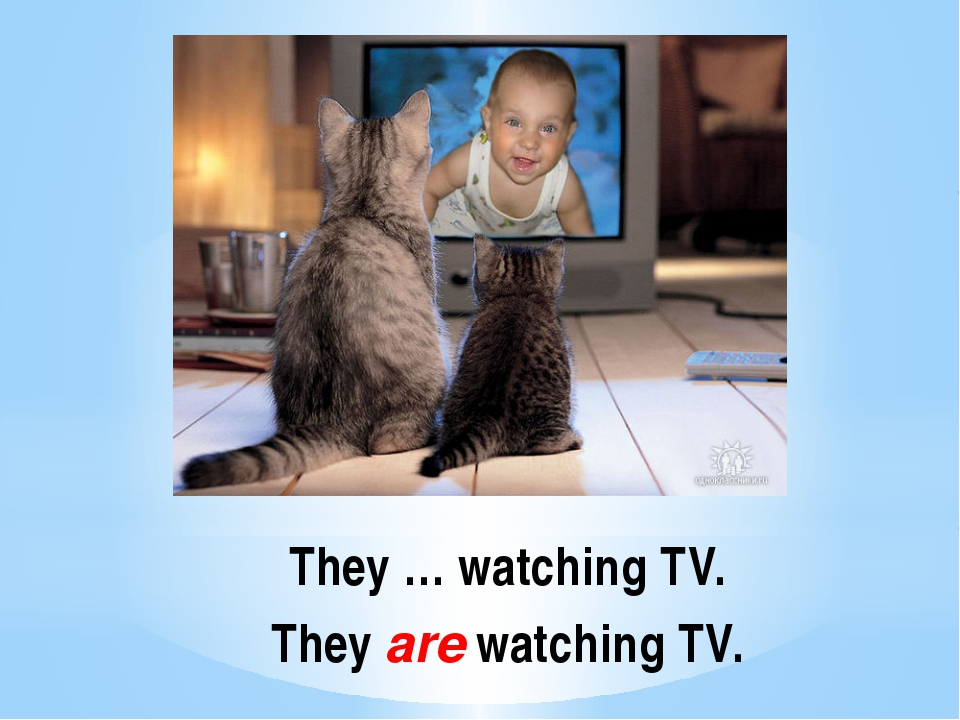 They … watching TV. They are watching TV.